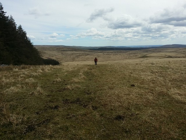 Out on the moor near White Ridge