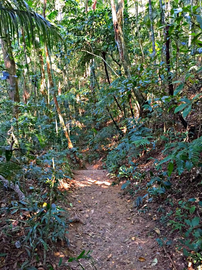 Tijuca Forest Hiking Path