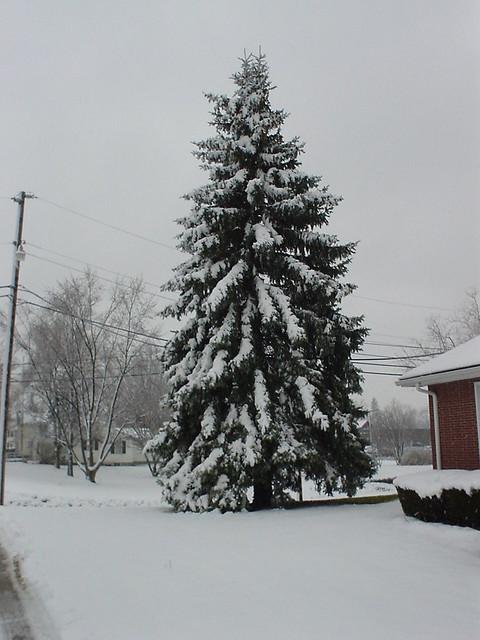 20031205 初雪 029