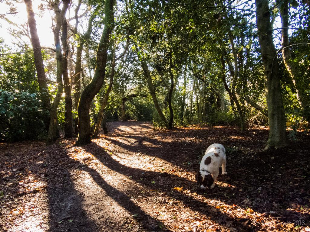 Max in Llewelyn Wood