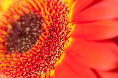 Blumen / Flowers