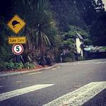 Imagine de Rainbow Springs lângă Rotorua. square squareformat iphoneography instagramapp xproii uploaded:by=instagram