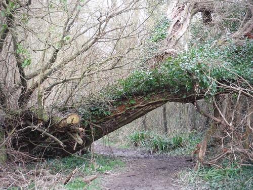 Path near Clavering Farm (III)