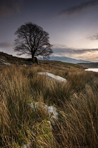 Lone Tree, Snowdonia