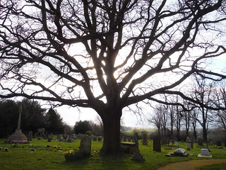 Tree in Churchyard, All Saints, Wing
