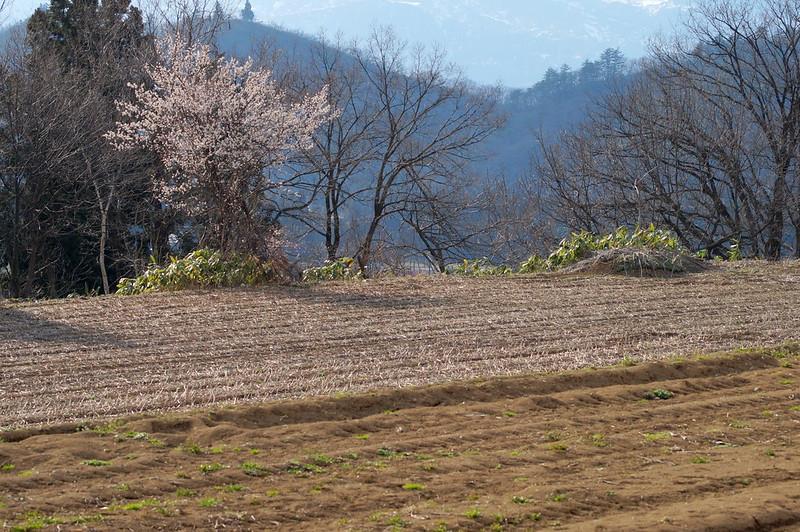春が来て、花が咲く_2016-03-27_NO2