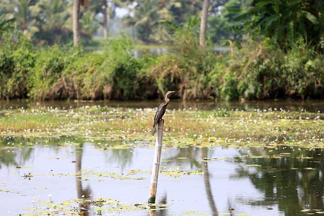 1604India-Birds4