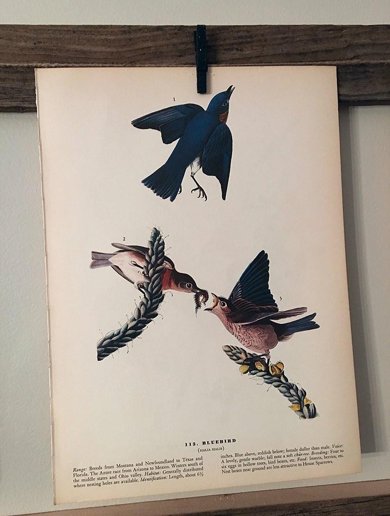 Vintage Blue Bird Print