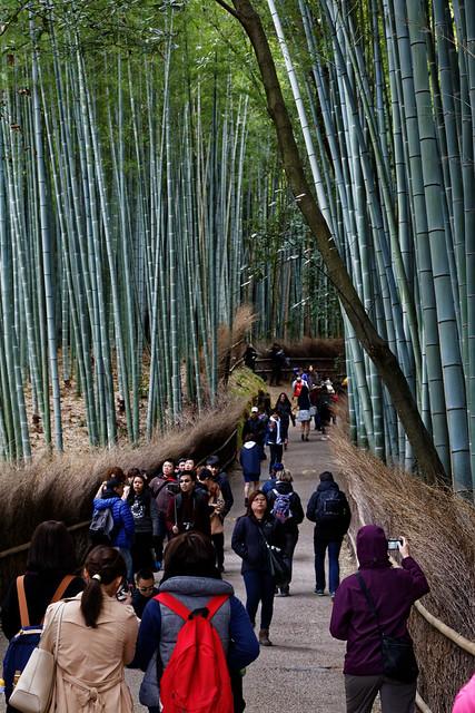 Arashiyama 3/25