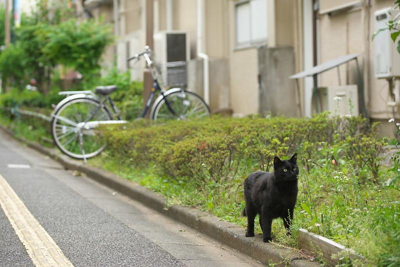 東京路地裏散歩 豪徳寺のネコ 2016年5月1日
