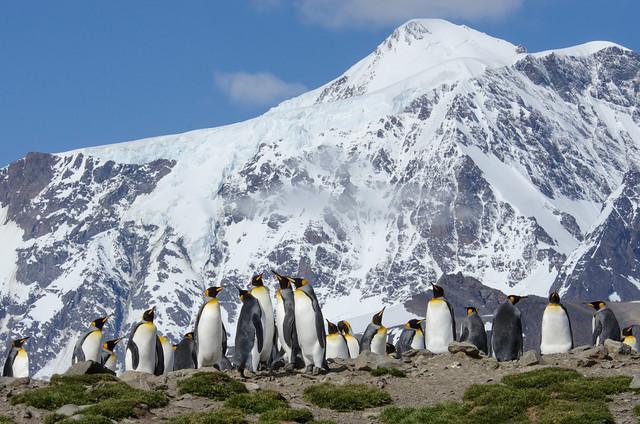 King Penguins enjoying the view