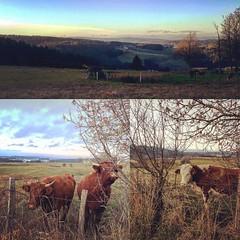 #madeinfrance #campagne #rurallife #hauteloire #auvergne