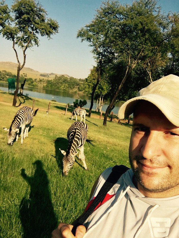 Zebras at Heia Safari