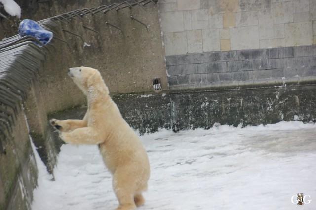 Besuch Zoo Rostock 23.01.20169