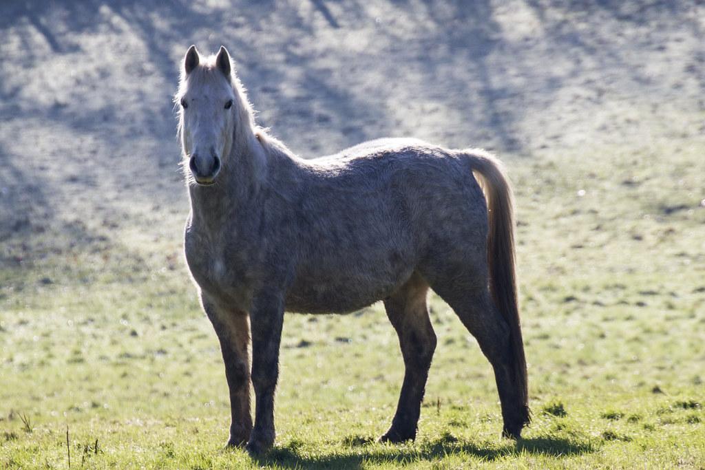 HAI! I am an horse