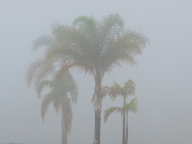 foggy palms