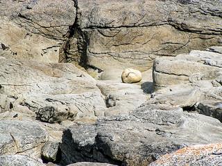 the cat`s pebble - Saint Guénolé - Bretagne - France