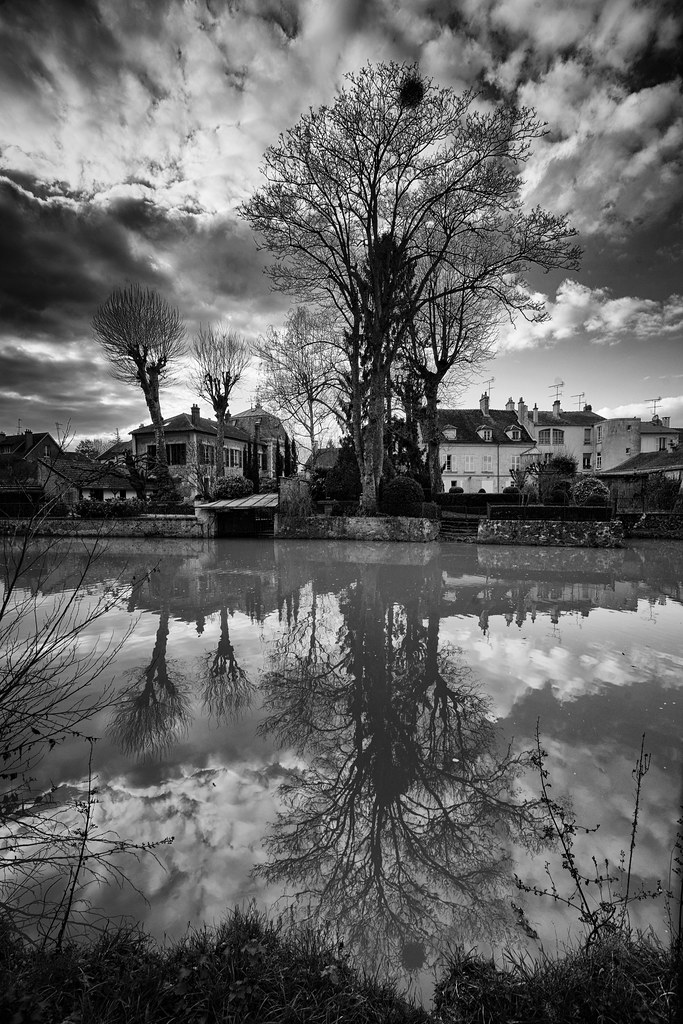 L'arbre et le canal