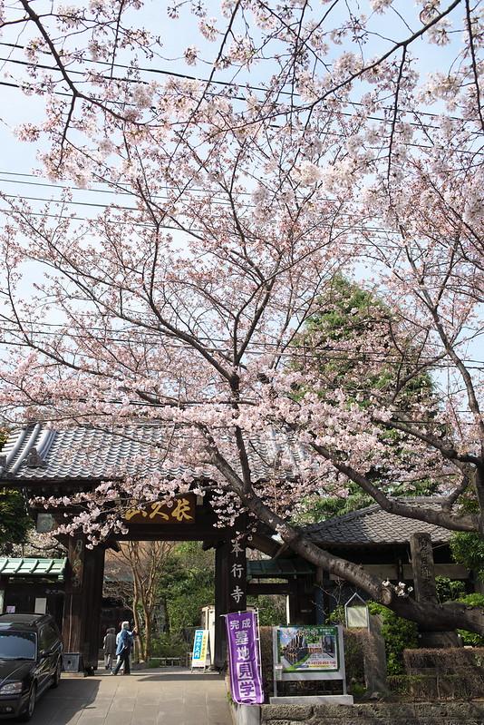 東京路地裏散歩 日暮里の桜 2016年3月31日