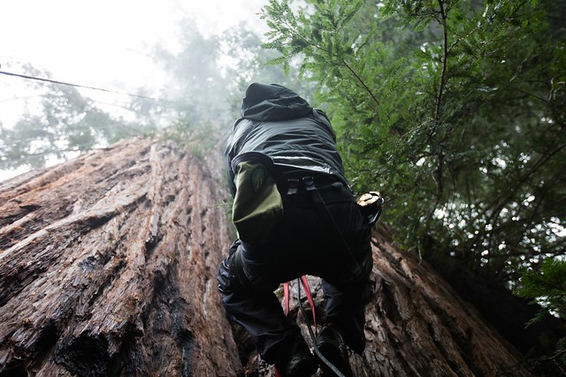 photo of redwood climb