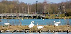 Le Parc de la porte du Hainaut - Raismes