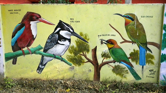 One of a series of painted mural to help identify the birds of Agra, India