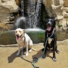 Cassie and Shiloh and a waterfall.