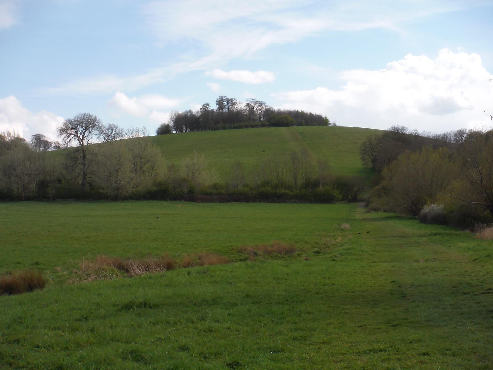Round Hill, Little Wittenham SWC Walk 44 - Didcot Circular