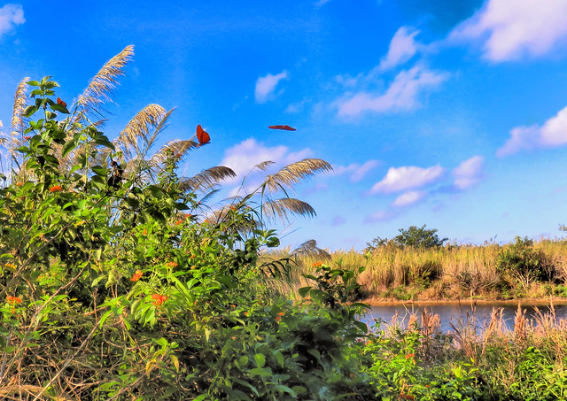Butterflies and Blue Skies HDR  20151229
