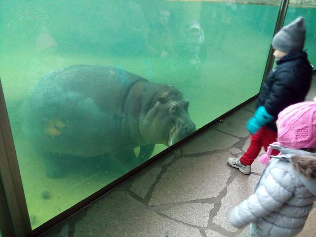 Zoológico de Berlim