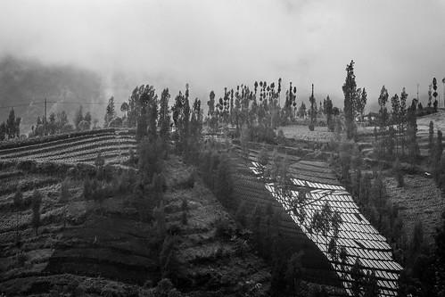 world voyage travel trees blackandwhite mist monochrome misty fog skyline canon indonesia landscape asia southeastasia terrace outdoor culture arbres 7d asie agriculture paysage brouillard indonesie brume canoneos7d canon7d
