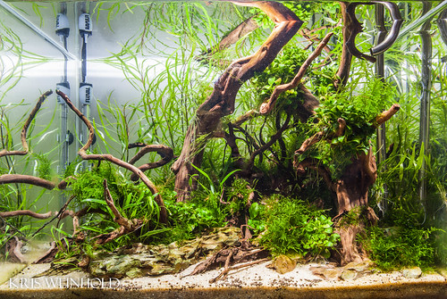 The Old Scape Used Pretty Much The Same Plants, But Had Become Very  Overgrown With Moss And I Was Ready For A Change. Aquavas Aquascape
