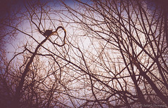 Love Nest.