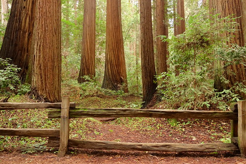 ocean california park santa trees red mountains west love nature beautiful beauty cali forest fence wonderful landscape coast landscapes amazing scenery view state pacific image clinton breath picture super scene glorious henry cruz remote felton redwood redwoods lovely taking trump rugged enchanted sanders rubio cowell 2016 fprest