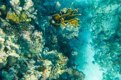 Snorkeling, Montego Bay, Jamaica