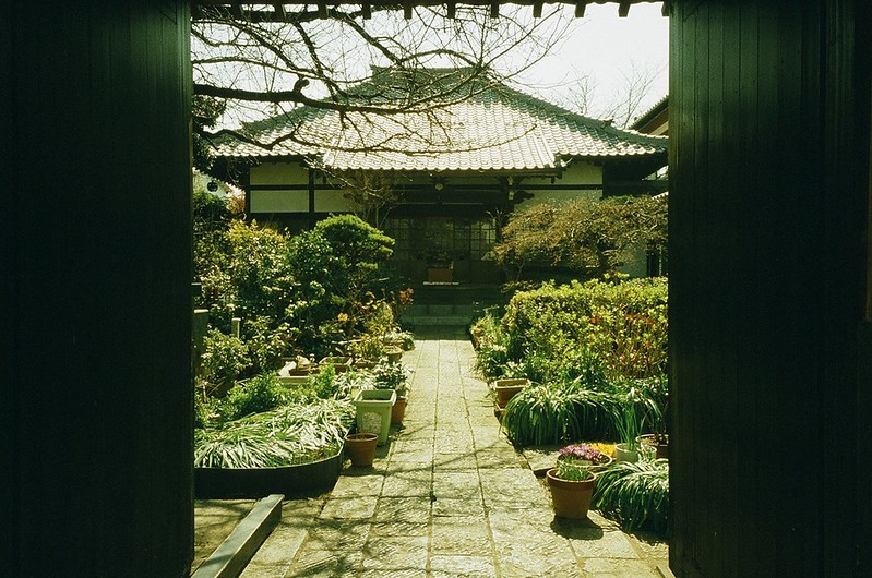 根津・谷中 by RICOH GR1s 2016年3月17日