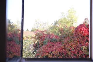 a window - fall