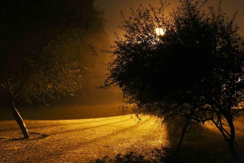 100 Things to Do Before You Quit Delhi – Night Walk, Lodhi Gardens