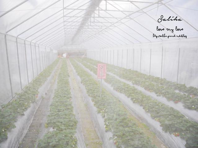 台北內湖一日遊採草莓下午茶草莓園 (20)