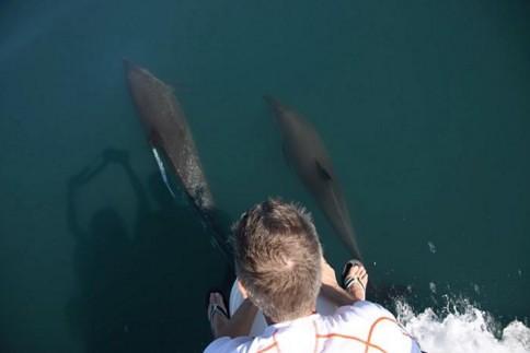 Amazing Dolphin Story