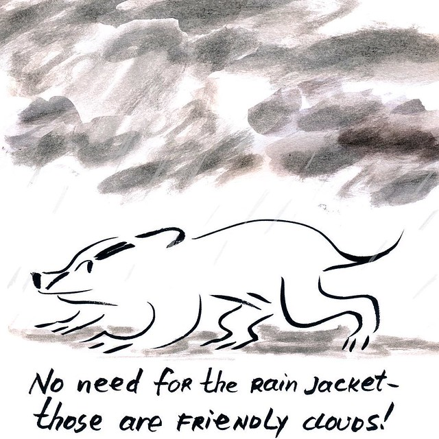 Badger and weather prediction #parenting #badger #badgerlog #weather #rain #rainyday #rainclouds #rainjacket #elnino
