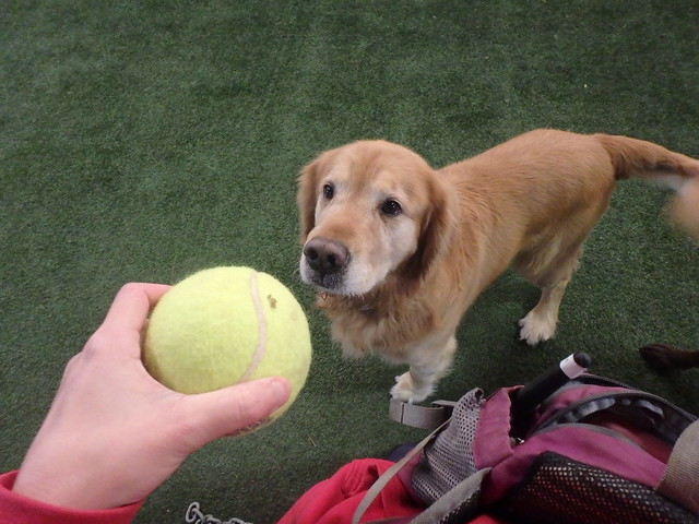 03/21/16 Tennis Ball Play :) !!
