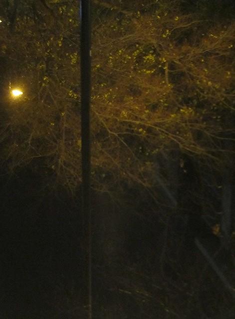 Árbol-aparición