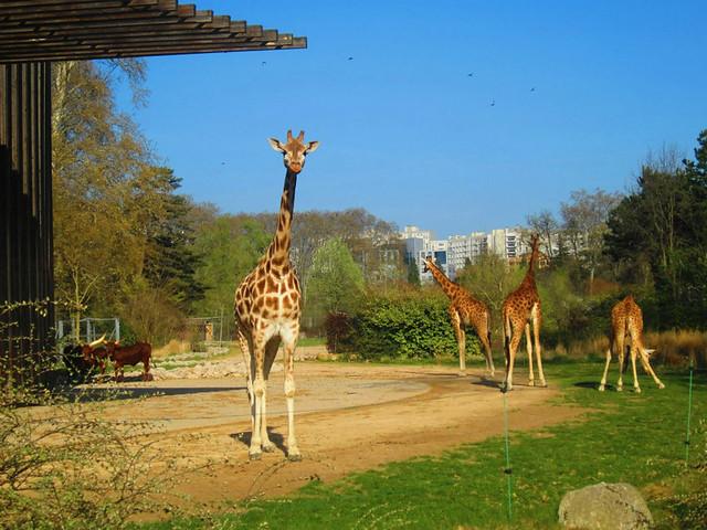 lyon-zoo