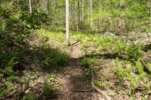 Pinnacle Mountain Falls trail - 2