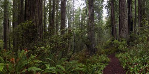 statepark panorama rain northerncalifornia fog redwoods delnortecoastredwoodsstatepark
