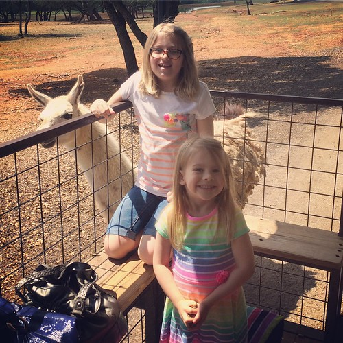 Highly recommend the Exotic Safari Zoo in Johnson City, TX. We got to feed and pet llamas, zebras, camels, deer, elk, buffalo and a dozen other animals. SO COOL.
