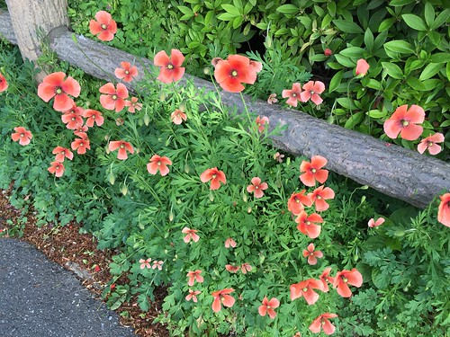 道に咲いている花も素敵