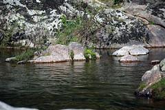 Grünes Moos auf den kleinen Inseln