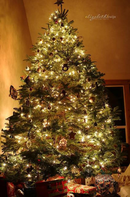 Tree01W